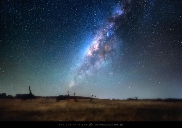 GiraffesbyStarlight.jpg