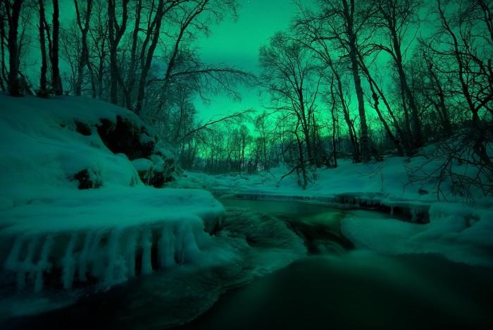 ForestGlow.jpg