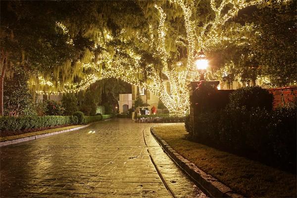 warm-white-led-tree-xmas.jpg